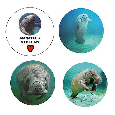 Manatee  Magnets B:  4 Cool Manatees for your Fridge or Collection-A Great Gift