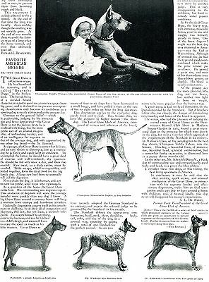 1910 Original GREAT DANE Big Pg Glossy Article & Real PHOTOS. From Country Life