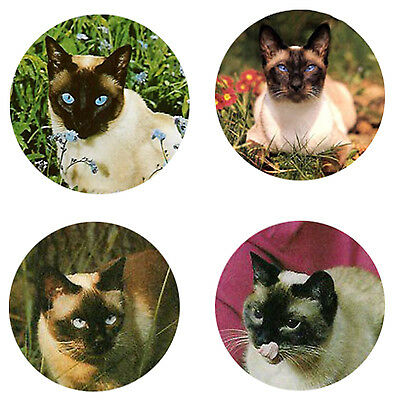 Siamese Cat Magnets: 4 Siamese Cats for your Fridge or Collection-A Great Gift