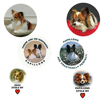 Papillon Magnets:   6 Practically Perfect Paps for your Collection-A Great Gift