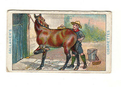 Boy Scout Series Gallaher Ltd. Cigarette Cards  No 6 How to Clean a Kicking Pony
