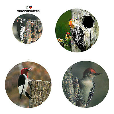 Woodpecker Magnets: 4 Cool Woodpeckers 4 your Fridge or Collection-A Great Gift