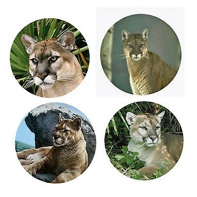 Cougar Magnets: 4 Way-Cool Cougars 4 your Fridge or Collection-A Great Gift