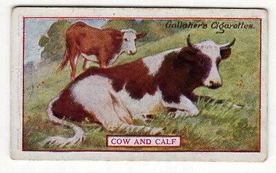 Vintage 1921 Wildlife Painting Card of a COW AND CALF