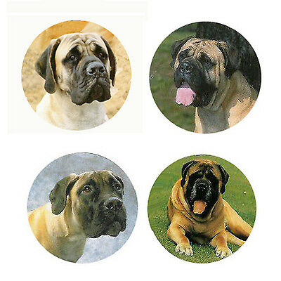 Mastiff Magnets 4 Way-Cool Mastiffs for your Fridge or Collection-A Great Gift