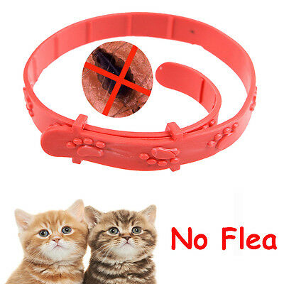 Grooming Protection Cat Neck Strap Anti Flea Mite Acari Tick Remedy Pet Collar