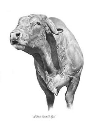 """I Don't Think So Gene"" 5X7 Mini Print by ROBYN COOK PENCIL ART~PBR Bull Series~"