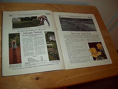 1925 Ornamental Trees Shrubs Bulbs Garden Plant Catalog Danker Florist