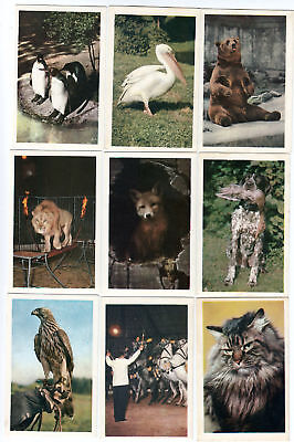 24 Wildlife Cards from the 1960s PENGUINS Peacock Ducks