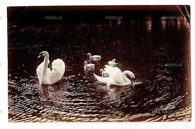 "Old Scottish Albumen Photo "" Swans & Young "" Charles Reid Wishaw Antique C.1890"