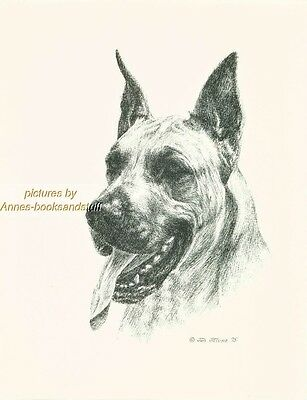 # 87 GREAT DANE  portrait  dog art print * Pen and ink drawing * Jan Jellins