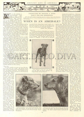 Antique 1916 AIREDALE Dog Breeding Training Trainer HISTORICAL Photo Article