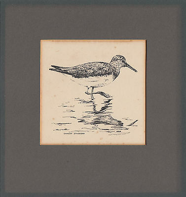 Original mounted pen & ink drawing of a Common Sandpiper by Roger G Street