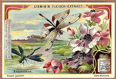 Dragonfly In Anemone Flower Art Nouveau Trade Ad Card