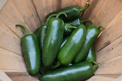 CHILLI 'Jalapeno' 30+ seeds Heat 5 mild vegetable garden HEIRLOOM Heritage chili
