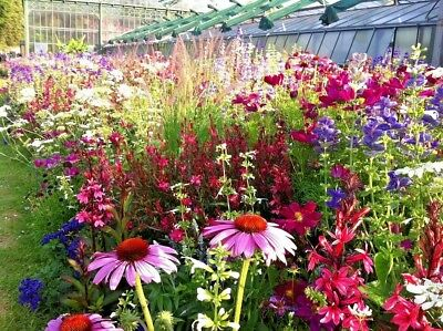 COTTAGE GARDEN MIX 250+ seeds colourful flower EASY TO GROW scatter bare patch