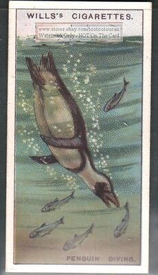 Penguin Diving c90 Y/O Trade Ad Card