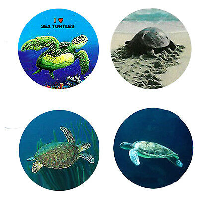 Sea Turtle Magnets : 4 Cool Turtles for your Fridge or Collection-A Great Gift
