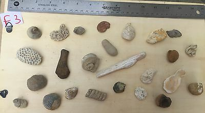 Vintage Collection Organic Mixed Coral Ocean Fossils Minerals Rare Finds Lot F3