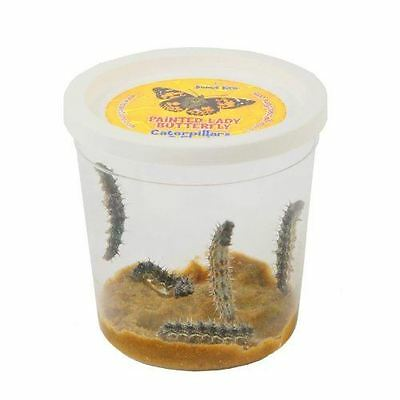 Insect Lore - Butterfly Garden or Pavilion Refill Voucher - caterpillars + food