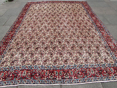 Old Shabby chic Traditional Hand Made Persian Wool Cream Carpet 335x255cm