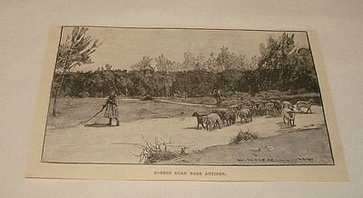1893 magazine engraving ~ FOREST ROAD NEAR ANTIBES, France