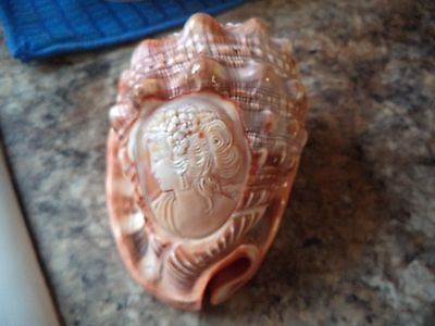 Vtg Sea Shell With Carved Cameo In The Side **wow**
