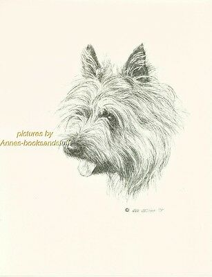 #77 CAIRN TERRIER portrait  dog art print * Pen and ink drawing * Jan Jellins