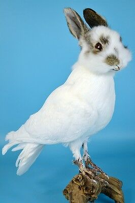 taxidermy of freak rabbit, rabbit head on pigeon body.cool gift 2#
