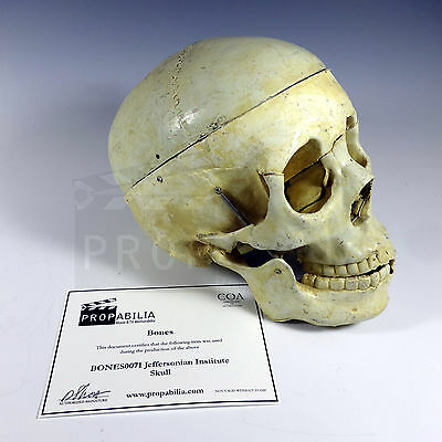 BONES Television Series Prop Jeffersonian Skull And Booth ID Card (#0071)