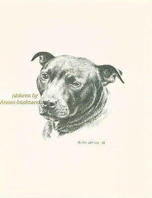 #122 AMSTAFF PIT BULL TERRIER  *  dog art print *Pen & ink drawing * Jan Jellins