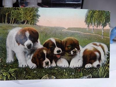 PPC Early antique 1908 St. Saint Bernard PostCard nr