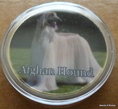 Dog  Afghan Hound   24K GOLD  PLATED 40 mm   COIN