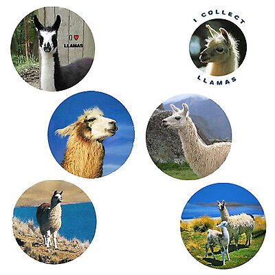 Llama  Magnets:   6 Likable Llamas  for your Collection-A Great Gift