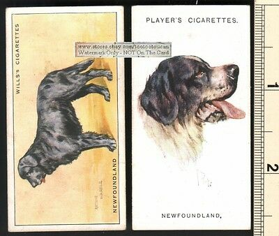 Newfoundland Dogs 2 Different 75+ Y/O Ad Trade Cards
