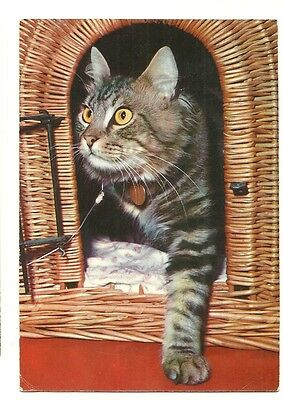 A larger format, photographic postcard showing a cat