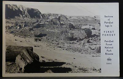 Sections of Petrified Logs in First Forest Petrified National Park AZ Circa 1950
