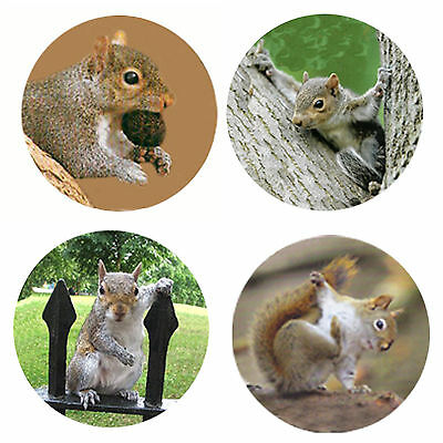 Squirrel Magnets-B: 4 Sassy Squirrels for your Fridge or Collection-A Great Gift