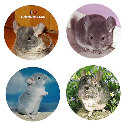 Chinchilla Magnets:4 Cool Chinchillas for your Fridge or Collection-A Great Gift