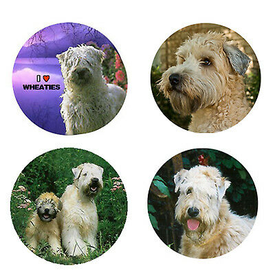 Wheaten Terrier Magnets:4 Cool Wheaties 4 your Fridge or Collection-A Great Gift