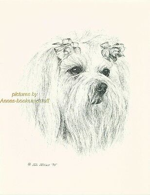 #44 MALTESE *  dog art print * Pen and ink drawing * Jan Jellins