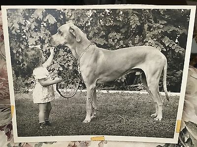 Original 8x10 Vintage Blk&Wh Photo Young Girl w/ uncropped Great Dane Dog