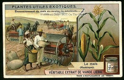 Black African Americans Planting Corn c1908 Trade Ad Card