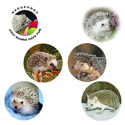 Hedgehog Magnets: 6 Cool Hedgehogs 4 your Fridge or Collection