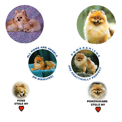 Pomeranian Magnets:  6 Practically Perfect Poms for your Collection-A Great Gift