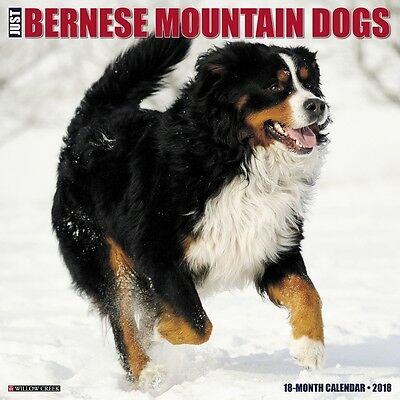 2018 Just Bernese Mountain Dog Wall Calendar,  Bernese Mountain Dogs by Willow C
