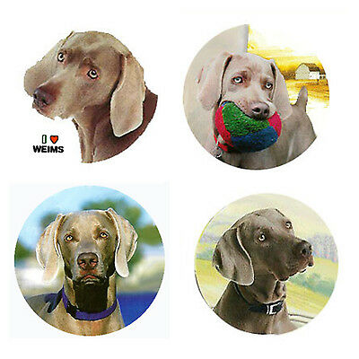 Weimaraner Magnets:   4 Cool Weims for your Collection-A Great Gift