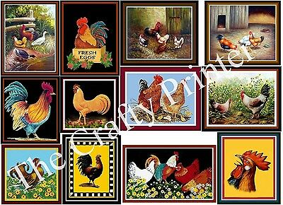 SET of TWELVE ROOSTER & CHICKEN MAGNETS - Ship FREE!