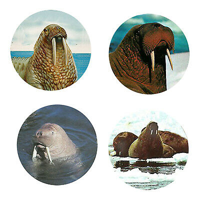 Walrus Magnets: 4 Way-Cool Walrus for your Fridge or Collection-A Great Gift