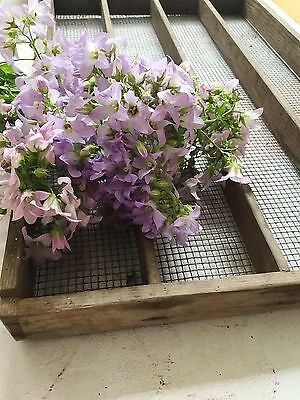 Vintage Seed Tray / Apple Tray Wooden Metal Mesh Garden Greenhouse